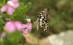 Why insects are crucial for ecological balance