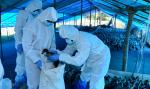 Were warning signs about bird flu in Kerala overlooked