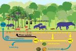 उष्णकटिबंधीय जंगलों में मिट्टी को अधिक उपजाऊ बनाते हैं बड़े स्तनधारी