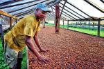 कॉफी: अमीर होती कंपनियां, गरीब होते किसान