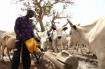 Insights from Fulani pastoralists and host communities in southwestern Nigeria