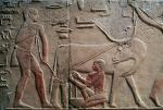 Environmental change may have played a role at the dawn of Egyptian history — here's how