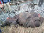 Two forest officials suspended for deaths of elephants in train accident