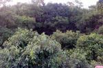 संरक्षित क्षेत्रों में 41 फीसदी कम होती है वनों की कटाई: शाेध