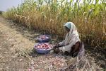 खेती में लागत कम करने और तकनीक को बढ़ावा देने की जरूरत