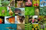 प्रजातियों के भीतर छिपी हुई जैव विविधता का लगातार नुकसान हो रहा है : अध्ययन