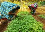 Nutrition in backyard gardens: Odisha's tribal women show the way