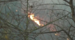 सिमलीपाल की आग भड़कने का कारण यूकलिप्टस के पेड़ तो नहीं