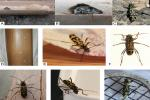 बांस को चट करने वाले ये कीट बनें दुनिया के लिए चुनौती