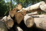 अमीर देशों के नागरिकों के खाने का शौक पूरा करने के लिए चार पेड़ों की चढ़ती है बलि