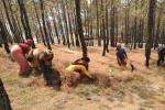 Forests under indigenous people more protected, says new report