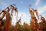लू के कारण हो सकता है फसलों को 10 गुना अधिक नुकसान