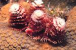 इंसानी गतिविधियों के चलते विलुप्ति के कगार पर हैं 57 फीसदी समुद्री प्रजातियां