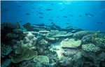 Marine pollution, coastal development: Coral reefs need to be saved