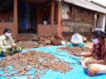 Too much of tamarind leaves Odisha's tribals in a lurch