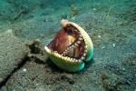 भूमध्य रेखा से ध्रुवों की ओर जाने को मजबूर हो जाएंगी महासागरों की हजारों प्रजातियां