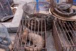 डब्लूएचओ ने की बाजारों में जीवित जंगली जानवरों की बिक्री पर प्रतिबन्ध की अपील