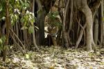 क्या जंगलों और जैवविविधता को बचाने के लिए संरक्षित क्षेत्र घोषित करना ही है काफी