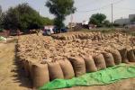 हरियाणा में मजदूरों की कमी से मंडियां गेहूं से हाउसफुल, खरीद की गति धीमी