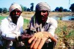 खाद्य प्रणाली शिखर सम्मेलन: किसानों को समर्थन देने से सतत विकास लक्ष्यों को हासिल करना मुश्किल