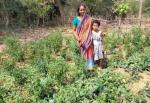 How kitchen gardens are doing wonders in the remote villages of Odisha