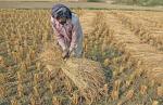 स्टेट ऑफ इंडियाज एनवायरमेंट 2021: फसलों का उत्पादन बढ़ा, लेकिन किसानों की संख्या घटी