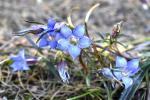 विश्व पर्यावरण दिवस: उत्तराखंड में ऑर्किड फूलों से लेकर लुप्त होने की कगार पर पहुंची वनस्पतियों को बचाने की कोशिश