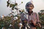 कपास उत्पादक देशों पर बढ़ रहा है जलवायु परिवर्तन का खतरा