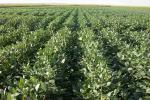 हवा और सौर ऊर्जा से भोजन उगाना है फसल बोने से ज्यादा फायदेमंद