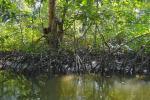 तटीय इलाकों में रहने वाले लोगों को तूफानों से बचाते हैं मैंग्रोव वन: अध्ययन