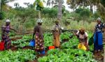 Tracing the history of farming across Africa gives clues to low production outputs