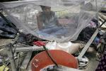 सदी के अंत तक 840 करोड़ लोगों पर मंडराने लगेगा डेंगू और मलेरिया का खतरा
