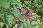 नैनीताल:किंग कोबरा को बचाने की धुन