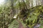 उष्णकटिबंधीय जंगलों की सीओ2 अवशोषित करने की क्षमता हो रही है कम: अध्ययन
