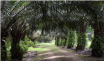 Palm oil and environmental, social challenges in India: The road ahead