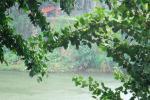 मानसून अपडेट: उत्तराखंड से लेकर पूर्वोत्तर भारत के अधिकतर राज्यों में होगी मूसलाधार बारिश