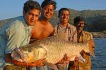 Why are fish not considered wildlife in India, ask piscean experts