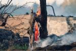भारत में पेड़ों की 469 प्रजातियों पर मंडरा रहा है विलुप्त होने का खतरा