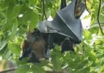Kerala never fully eradicated Nipah, but contained it: Experts