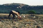 Over 90% districts in India now face arid conditions