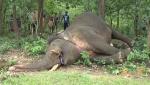 Jumbo graveyard: Odisha registers 282 elephant deaths since 2018