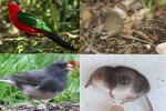 गर्म होती जलवायु के चलते जानवरों का बदल रहा है आकार: अध्ययन