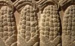 Mesoamerica, origin of several global crops, faces floristic biodiversity loss: Study