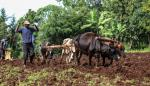 Africa's green revolution initiative has faltered: Why other ways must be found