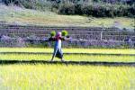 A farmer becomes a labourer