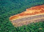 क्या हम कार्बन डाइऑक्साइड को सोखने में वनों की भूमिका को अधिक आंक रहे हैं?