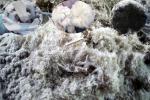 अब इंसान के बालों, मुर्गी और बत्तख के पंखों के कचरे से बनेंगे खाद और चारा