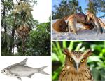 These animals and plants of India could have become 'possibly extinct' : IUCN