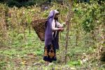United Nations Food Systems Summit: Need to transform food systems, say experts