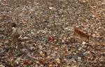 Medical waste incineration plant in Bihar's Sone river bed faces public flak